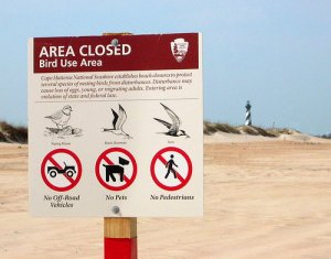 National Park Service announces pre-nesting beach closures on Cape Hatteras National Seashore.